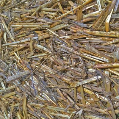 straw-800